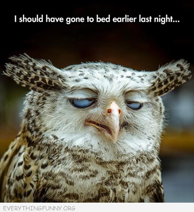 owl to bed earlier
